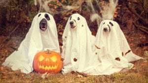 dogs dressed as spooky ghosts